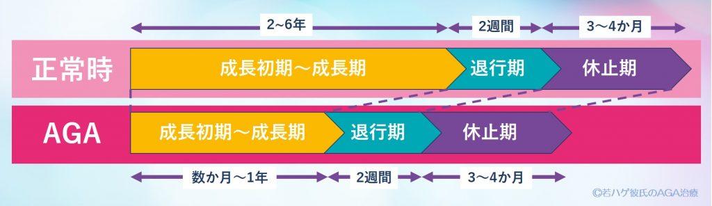 正常の人のヘアサイクルと、AGAの人のヘアサイクルの比較
